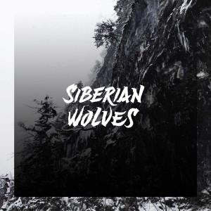 Siberian Wolves